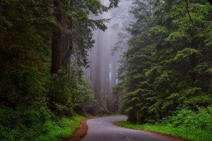 redwood california